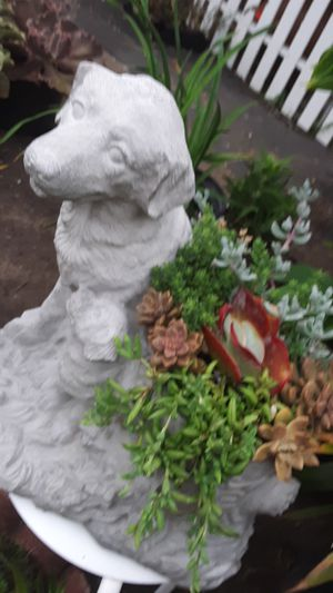 "20"" cement dog planter with succulent plants today only $35 for father's gift for Sale in Whittier, CA"