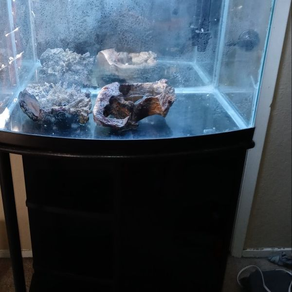 35 Gallon Bow Front Aquarium And Stand