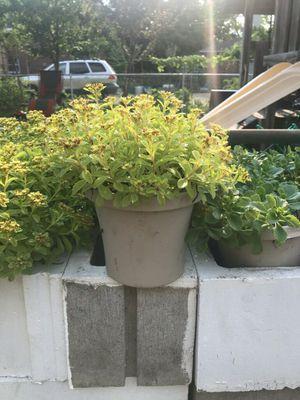 Perenials Plants.... for Sale in Riverside, IL