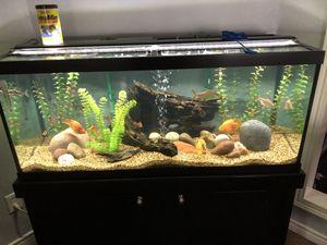 75 gallon freshwater aquarium for Sale in Wylie, TX