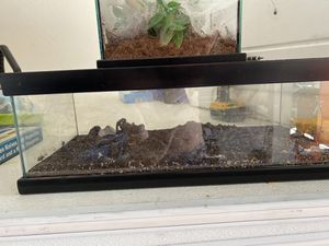 Reptile/ spider Cages. for Sale in Queen Creek, AZ