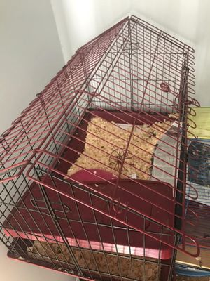 Guinea pig cages (comes with pet) for Sale in UPPR MARLBORO, MD