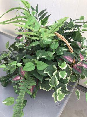 Nice fake plant for sale. for Sale in Santa Ana, CA