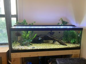 80 gallon fish tank, all equipment, and fish included for Sale in New York, NY