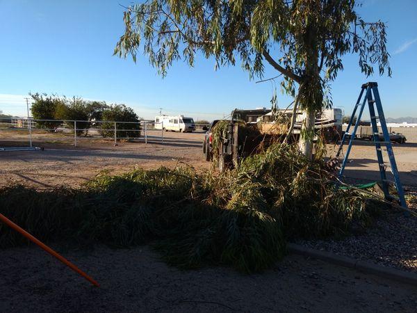 Tree trimming & remobal *602*668*4191*