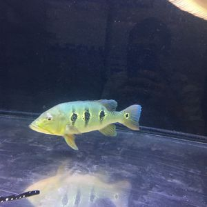 Moving Fish Tank Sale for Sale in Tustin, CA