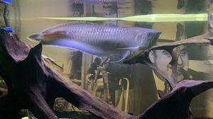 Fish tank decor for Sale in Schaumburg, IL