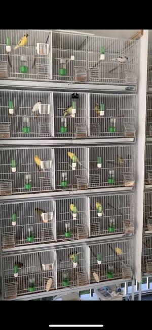 Jaulas de cria for Sale in Miami, FL