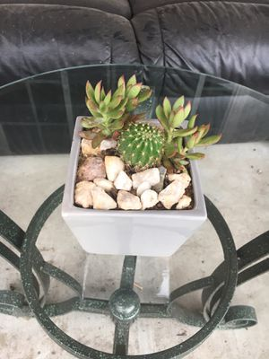 Small centerpiece with succulent and Cactus for Sale in Bloomington, CA