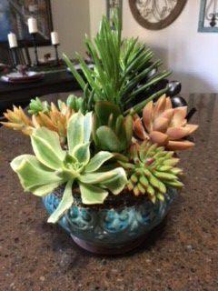 Pretty Pot w Succulents for Sale in San Marcos, CA