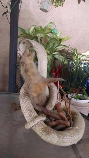 Stuffed cobra and mongoose for Sale in Norwalk, CA