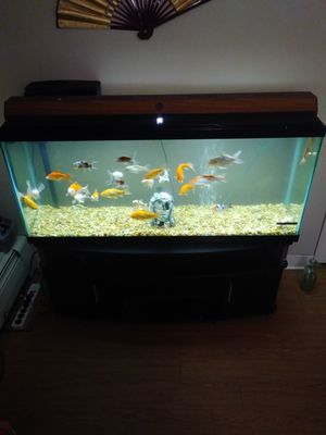 55 Gallon Fish Tank With Fish $200 for Sale in ROXBURY CROSSING, MA