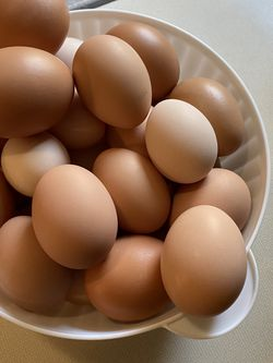 Fresh Chicken Eggs For Sale for Sale in Ocala,  FL