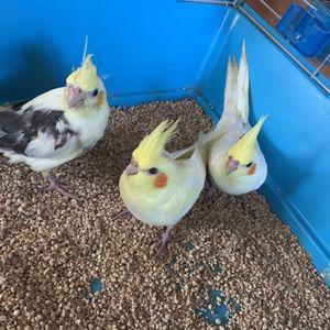 Bird Cage for Sale in Santa Clara, CA