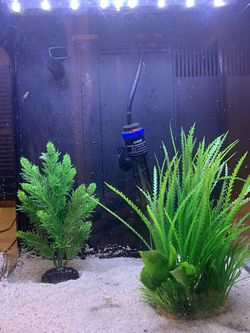 BioCube Salt or Fresh Water Acquarium Tank for Sale in San Clemente,  CA