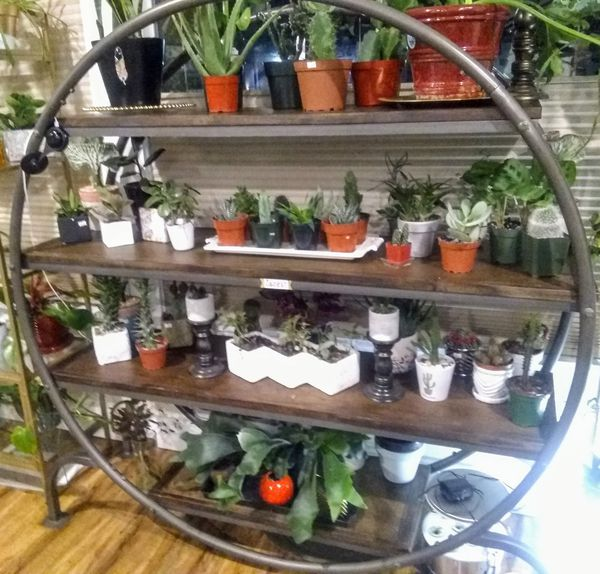 INDOOR PLANTS GALORE!! MONSTERA, BIRDS OF PARADISE, RUBBER, SUCCULENTS & MUCH MORE!!