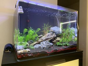 fully cycled ready to go aquarium-tank just add fish for Sale in Buena Park, CA