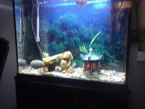 40 gallon fish tank for Sale in Irving, TX