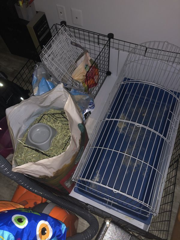 Guinea Pig Supplies & Cage