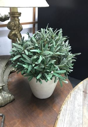 Faux house plant/shrub for Sale in Portland, OR