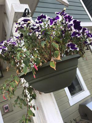 Fushia Hanging Basket in Good pot for Sale in Woodinville, WA