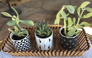 Succulent Ceramic Planters, w/ Bamboo Saucers, and Vintage Bamboo Basket for Sale in Phoenix, AZ