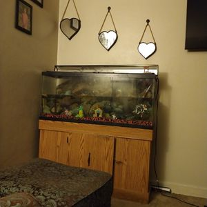 55 Gallon Fish Tank & Stand for Sale in Lorain, OH