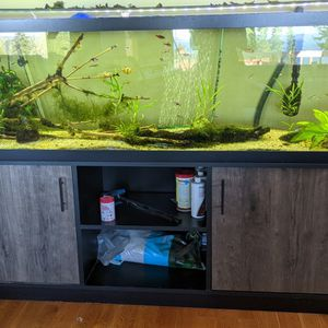 125 Gallon Freshwater Aquarium And Stand for Sale in Federal Way, WA
