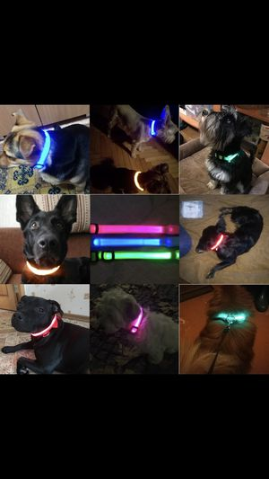 Safety LED Dog Collar for Sale in Inglewood, CA
