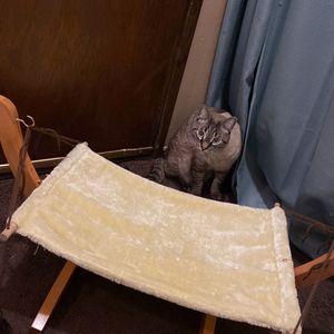 Cat Hammock for Sale in Portland, OR
