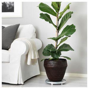 Plant pot/base/basket for Sale in Washington, DC