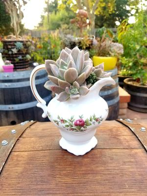 Succulent and an antique small pitcher for Sale in Gilroy, CA