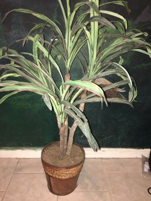 Fake plant for Sale in Selma, CA