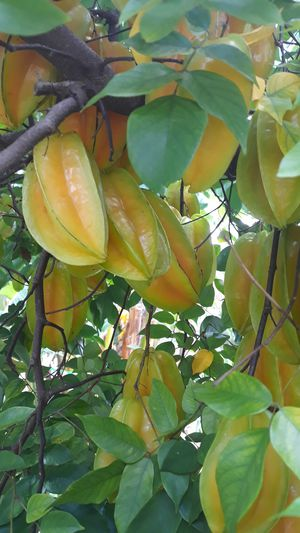 Starfruit/Carambola for Sale in Orlando, FL