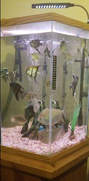 Fish tank for sale for Sale in Sacramento, CA