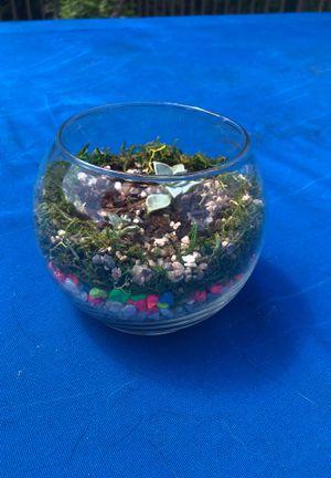 Clear glass succulent terrarium for Sale in Grapevine, TX