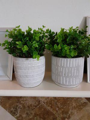 Plants for Sale in Houston, TX