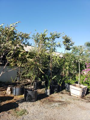 Trees for Sale in Ontario, CA