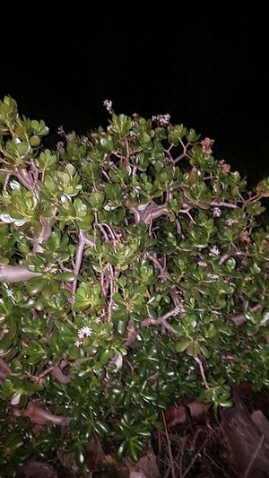 Free instant landscape succulents for Sale in Oceanside, CA
