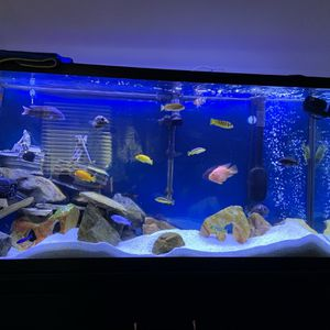 Fish Tank for Sale in Canyon Lake, CA