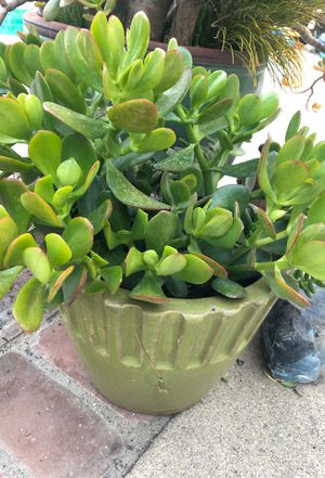 Small Jade plant and other succulents in a green pot for Sale in Claremont, CA