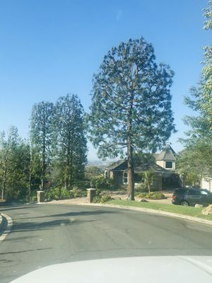 Tree care and removal for Sale in Placentia, CA