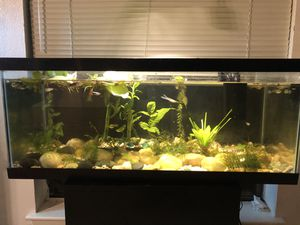 20 Gallon Fish Tank with filter/ Aquarium plants for Sale in Sugar Land, TX