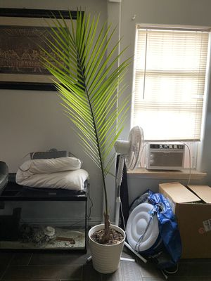 Plant with Pot for Sale in Fort Worth, TX