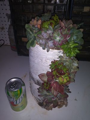 Live succulents planted in a log for Sale in Woodland, CA
