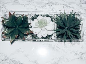 succulent arrangement for Sale in Miami, FL