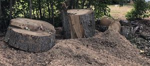 Free Firewood for Sale in Franklinton, NC