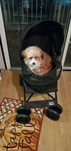 Pet carriage for Sale in New York, NY