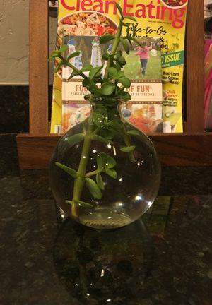 Live succulents for Sale in Phoenix, AZ