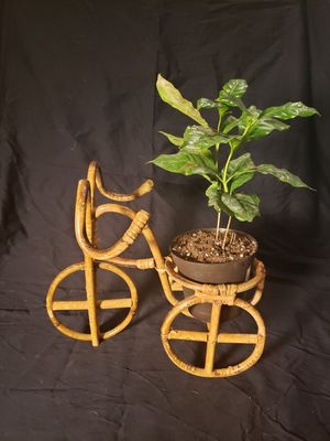 Vintage Bicycle Bamboo Planter for Sale in Denver, CO